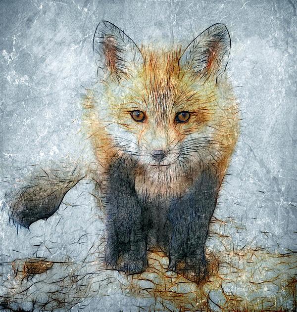 Fox Photograph - Curious Fox by Steve Barge