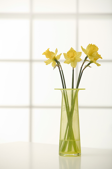 Daffodils In Vase Photograph by Comstock Images