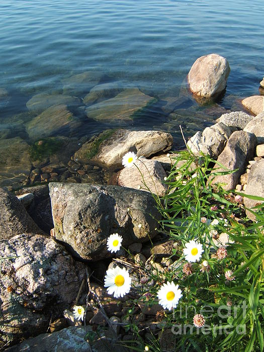 Daisy Photograph - Daisies By The River by Margaret McDermott