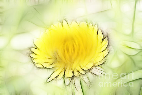 Dandelion Digital Art - Dandelion by Michal Boubin