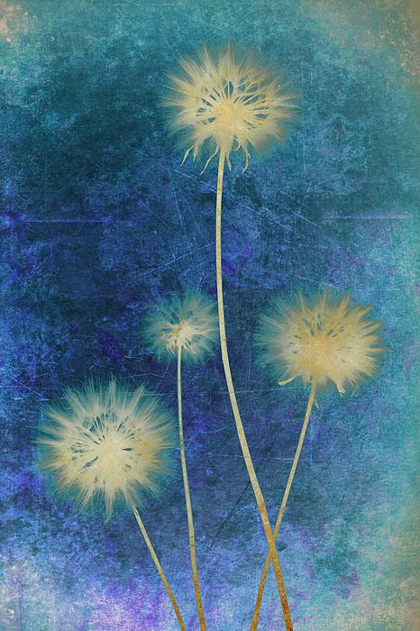 Dandelion Photograph - Dandelions by Nicole Neuefeind