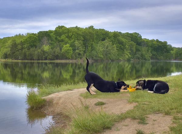 Dog Digital Art - Darcy And Hannah At The Lake by Kathleen Holley