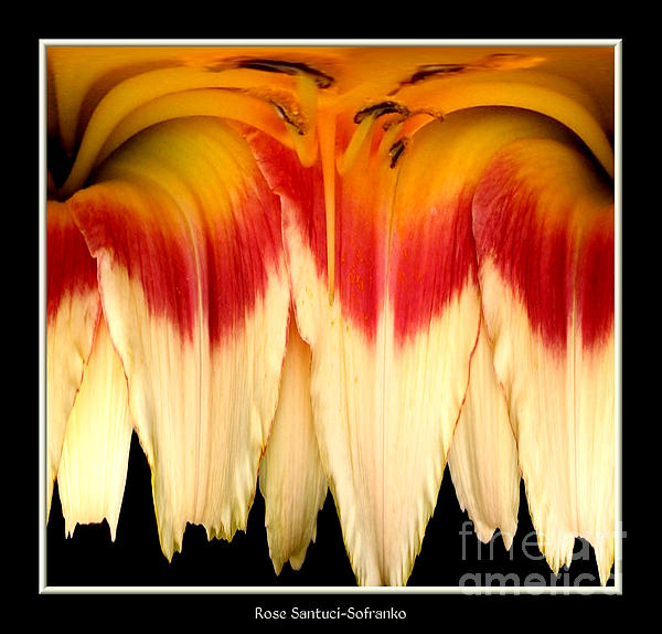 Daylily Photograph - Daylily Flower Abstract 2 by Rose Santuci-Sofranko