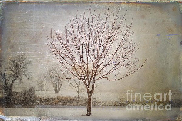 Nature Photograph - Days Of Old by Betty LaRue