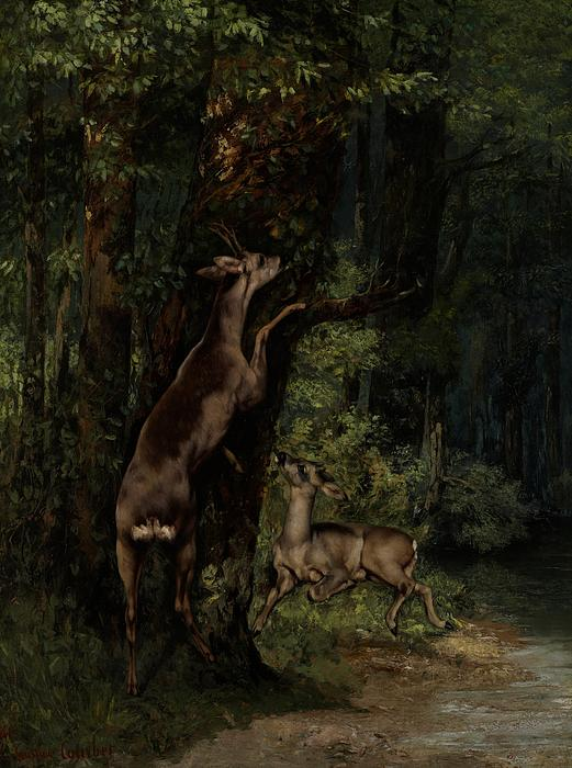 Deer; Animal; Animals; Forest; Wood; Woods; Woodland; Wooded; Trees; Tree; Eating; Reaching; Wild; Realist Painting - Deer In The Forest by Gustave Courbet