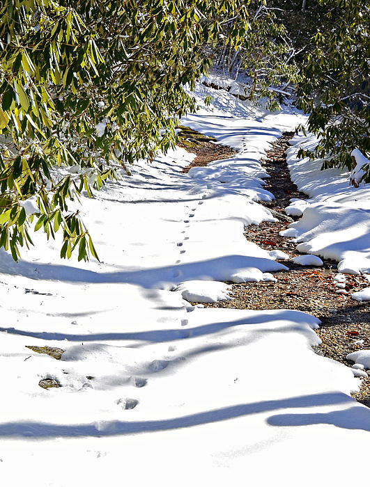 Snow Photograph - Deer Trail by Susan Leggett