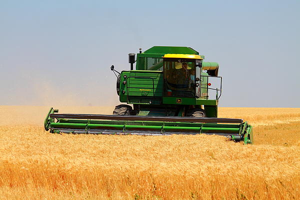 Wheat Photograph - Deere Field by Jason Drake