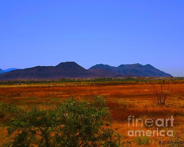 Desert Photograph - Desert Field by Rebecca Christine Cardenas