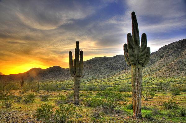 Arizona Photograph - Desert Sunset by Dan Myers