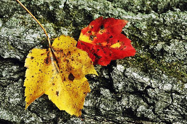 Autumn Photograph - Deux Feuilles by JAMART Photography