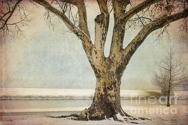 Tree Photograph - Dignity by Betty LaRue