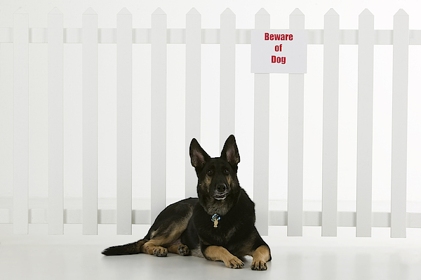 Dog Lying Down By Fence With Beware Of Dog Sign Photograph by Comstock Images