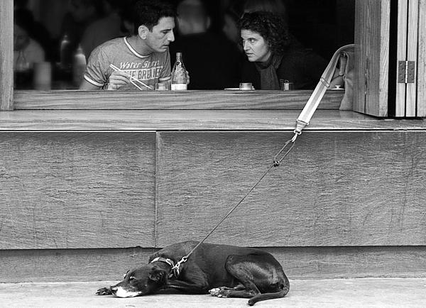 Candid Photograph - Dog What Dog by Stephen Norris