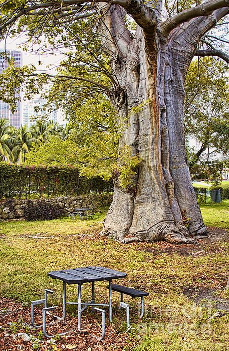 Downtown Miami Photograph - Downtown Old Tree by Eyzen M Kim