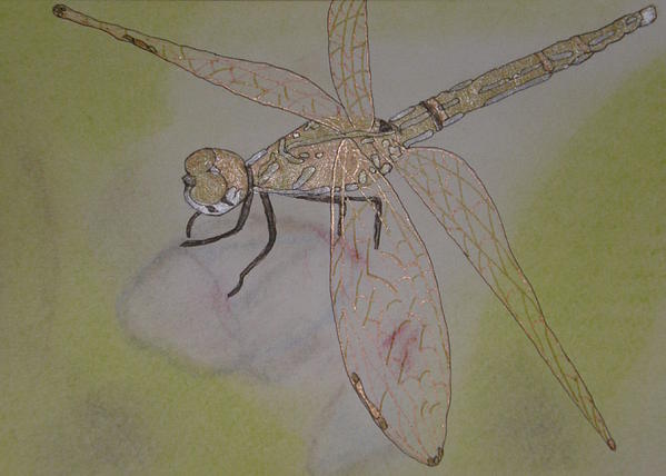 Dragonfly Painting - Dragonfly Visitor by Marcia Weller-Wenbert