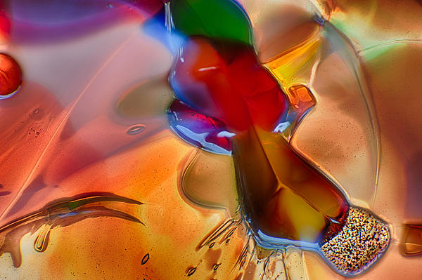 Blue Photograph - Dragonflying by Omaste Witkowski