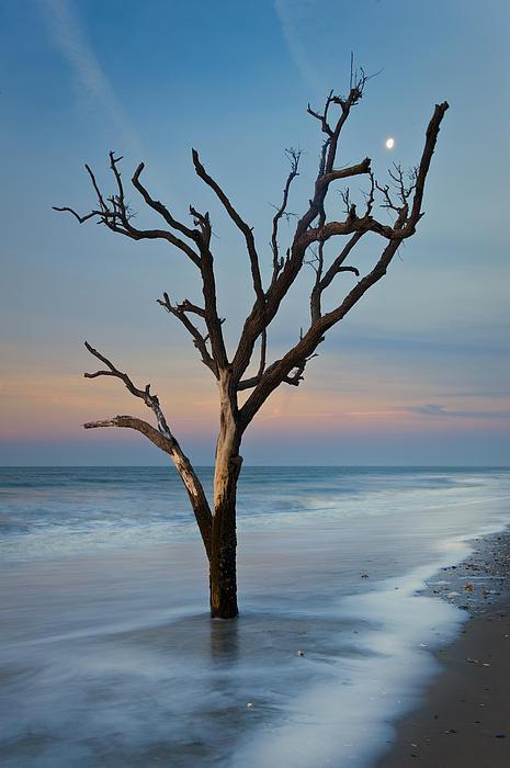 South Carolina Photograph - Dreaming In Dali by Joseph Rossbach