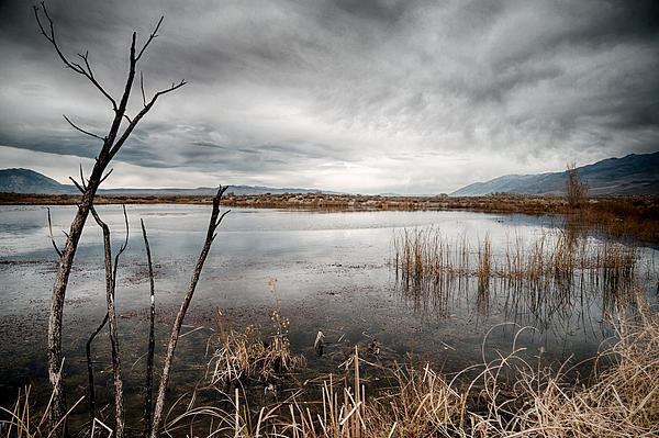 Clouds Photograph - Dreary by Cat Connor