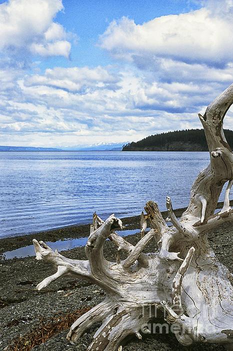 Driftwood Photograph - Driftwood On Beach by Thomas R Fletcher