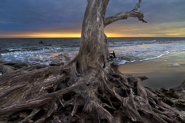Clouds Photograph - Driftwood On Jekyll Island by Debra and Dave Vanderlaan