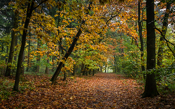 Drizzly Forest Path Photograph by William Mevissen