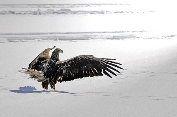 Ice Photograph - Eagle Prayer by RJ Martens
