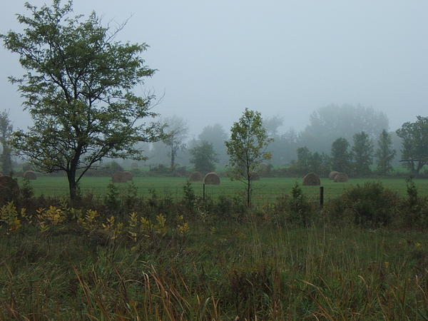 Country Photograph - Early Morning In The Country by Margaret McDermott
