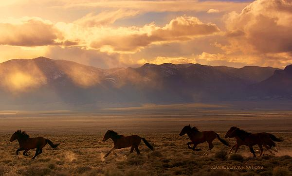 Wild Horses Photograph - Elusive Wild And Free Mustangs by Jeanne  Bencich-Nations