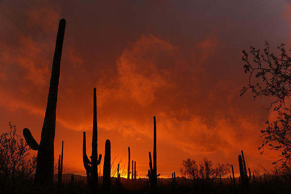 Desert Photograph - Embers Of The Day by Justin  Curry