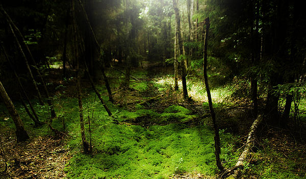 Nature Photograph - Enchanted Forest by Kim Lagerhem