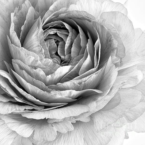 Flower Photograph - Essence by Priska Wettstein