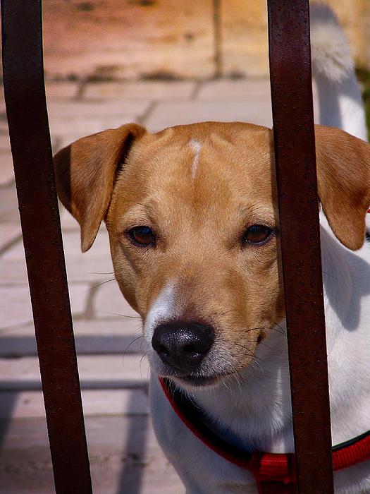 Dog Photograph - Expectant by Alessandro Della Pietra