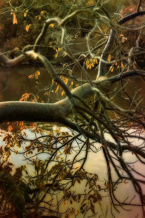 Woods Photograph - Fall At The Creek by Ellen Heaverlo