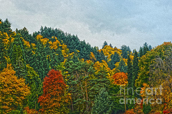 Fall Trees Photograph - Fall Trees by Nur Roy