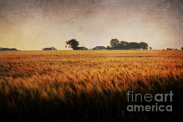 Wheat Photograph - Family Farm by Lisa Holmgreen