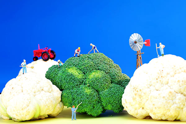 Agriculture Photograph - Farming On Broccoli And Cauliflower by Paul Ge