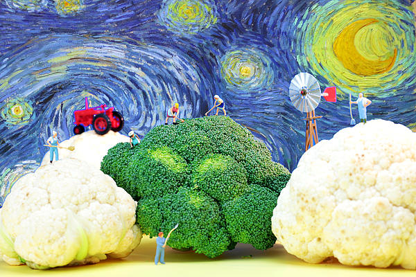 Agriculture Photograph - Farming On Broccoli And Cauliflower Under Starry Night by Paul Ge