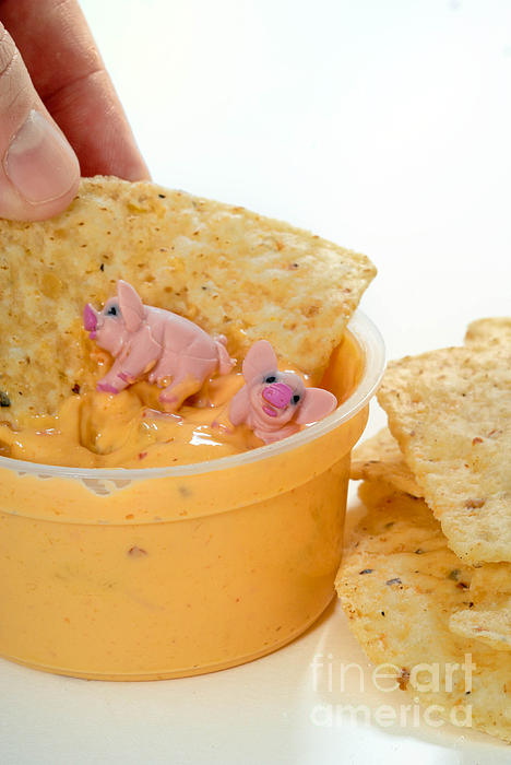 Cheese Photograph - Fat Pigs 3 by Amy Cicconi