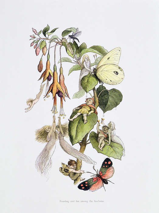 Fairy Painting - Feasting And Fun Among The Fuschias by Richard Doyle