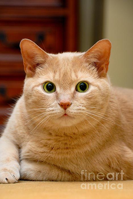 Alert Photograph - Feline Portrait by Amy Cicconi