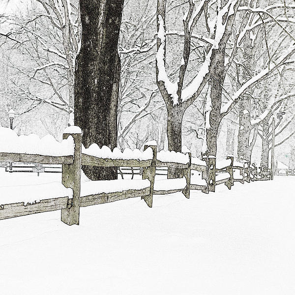 Fence Photograph - Fenced In Forest by John Stephens