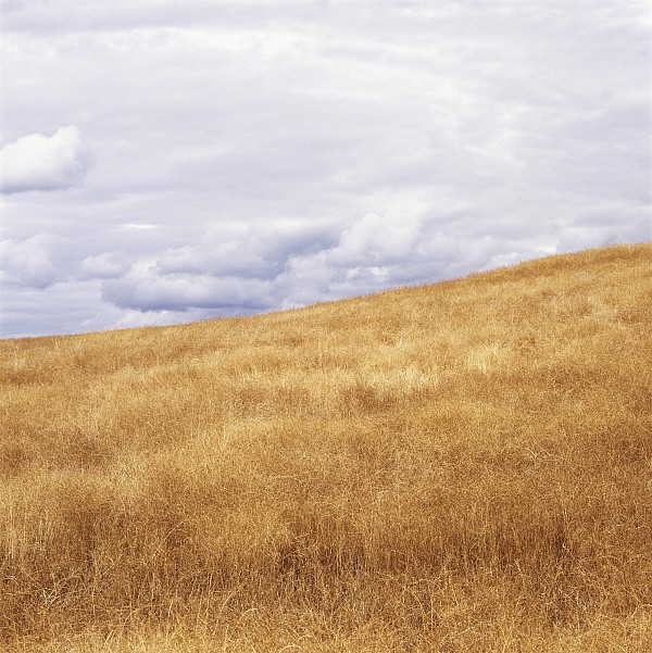 Light Photograph - Field And Sky Near Rock Creek, South by Bert Klassen