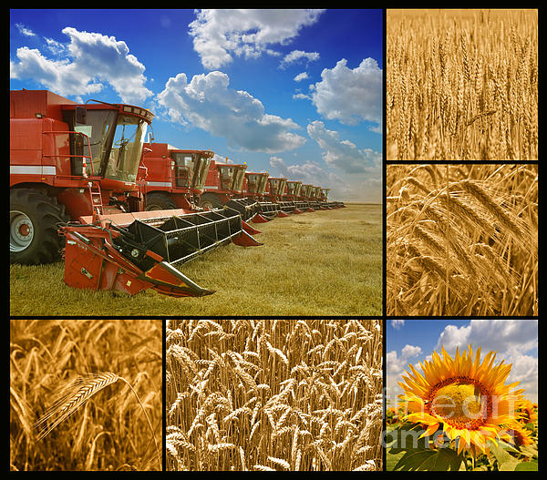 Fields Photograph - Fields And Grain Collage by Boon Mee
