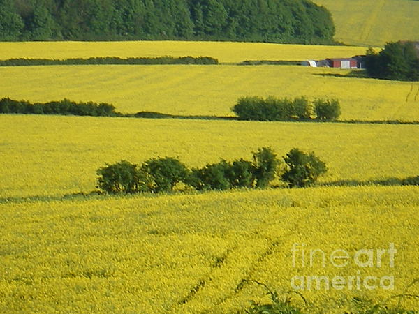 Landscape Photograph - Fields Of Yellow by Ann Fellows