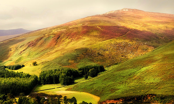 Ireland Photograph - Find The Soul. Golden Hills Of Wicklow. Ireland by Jenny Rainbow