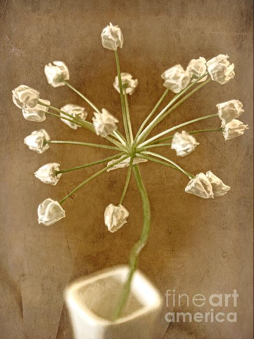 Seed Head Photograph - Firecracker by Peggy Hughes