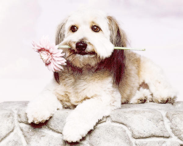 Dog Photograph - Flowers For My Best Friend. by VRL Art