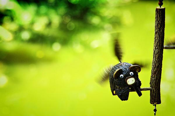 Travel Photograph - Flying Burin by Suradej Chuephanich