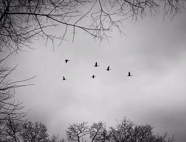 Birds Photograph - Flying South by Richie Stewart