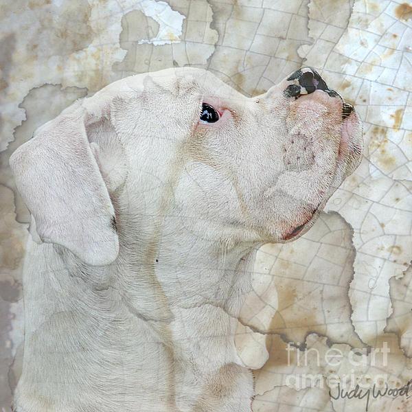Dog Digital Art - Focus by Judy Wood